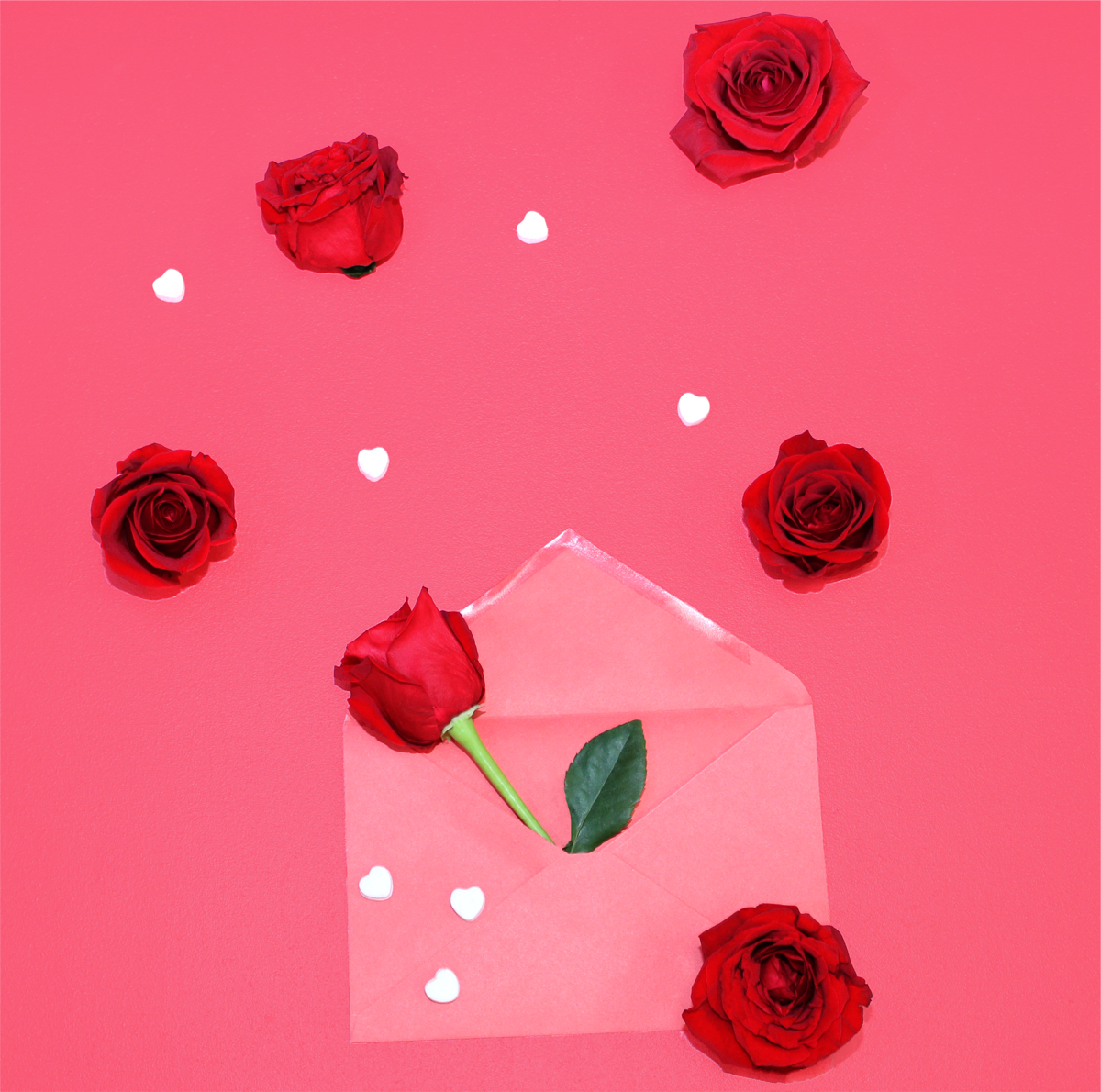 Red rose buds and white heart candies coming out of a pink envelope, surronded by hot pink background